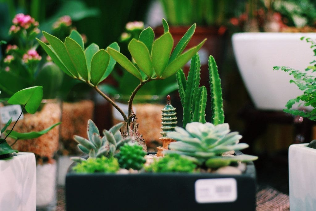 succulents and cacti in a black square plant pot