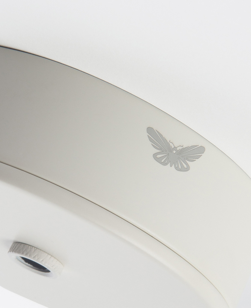 closeup of white ceiling rose with moth against white background