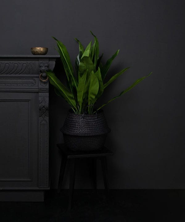 artificial Aspidistra plant in a black pot against a black background