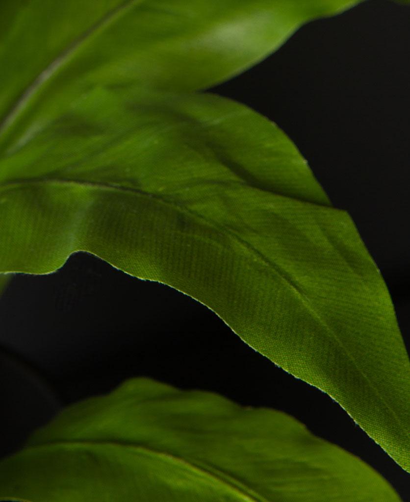 closeup of asplenium faux foliage