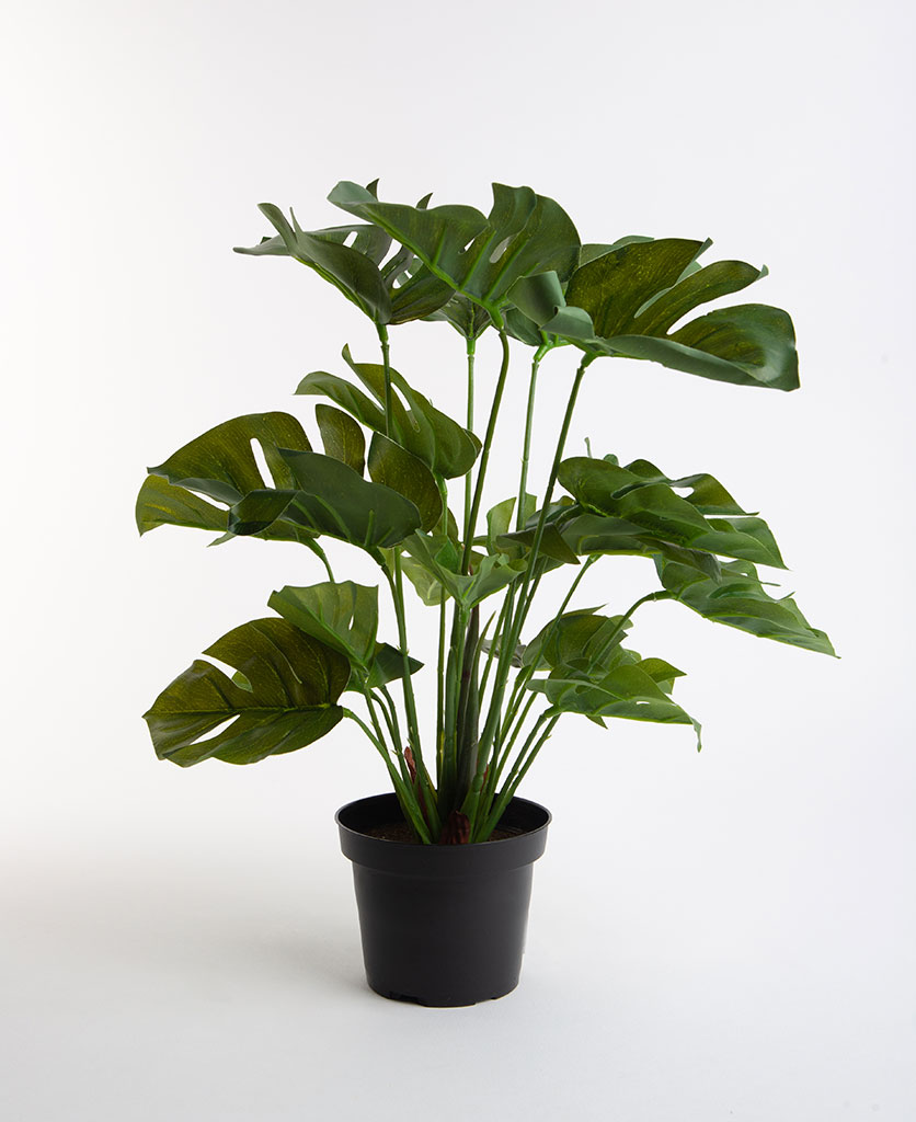 Artificial Cheese Plant in pot