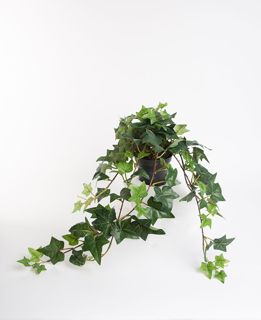 IVY artificial trailing plant