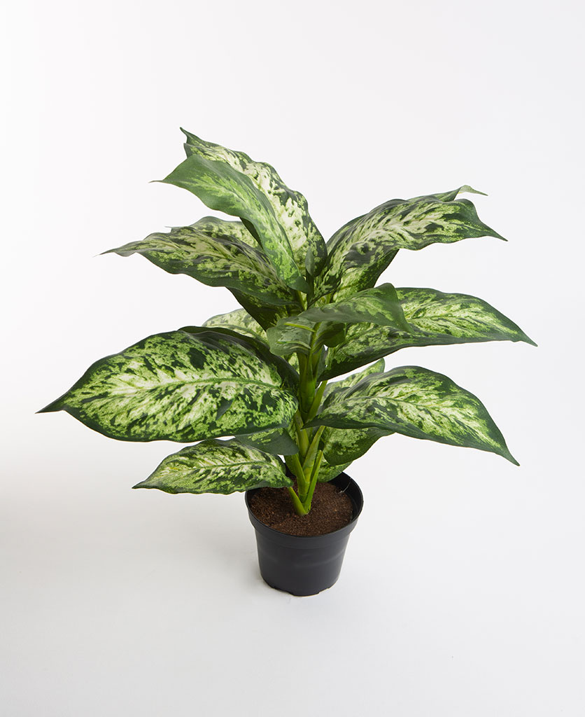DUMB CANE artificial plant