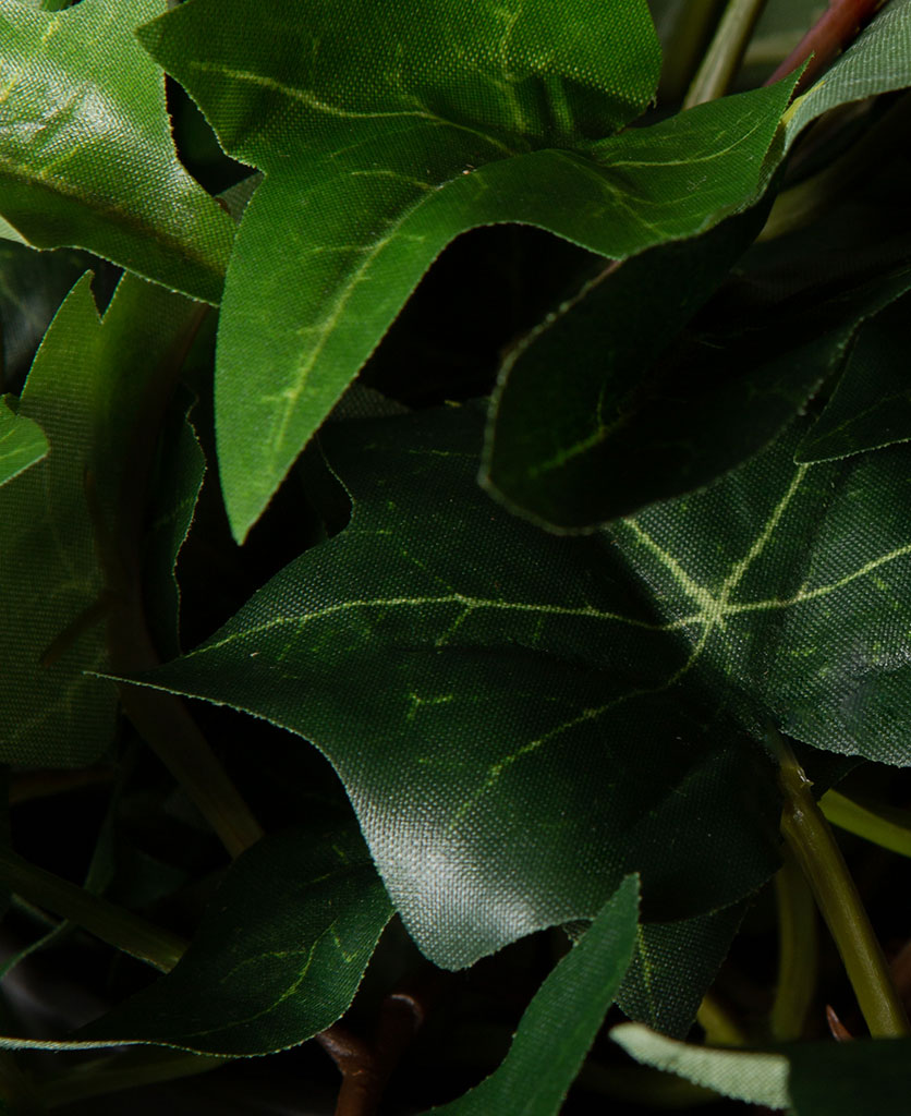 closeup of ivy leaves against black background