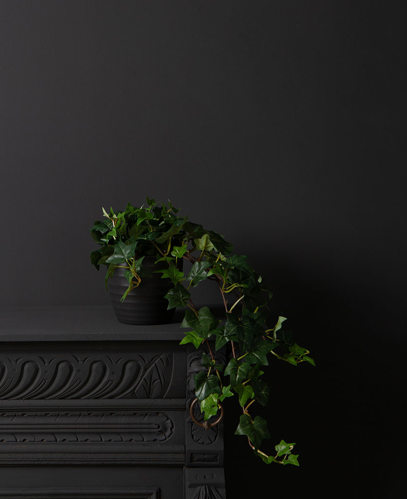 artificial ivy plants - indoor trailing variety in a black pot against a black background