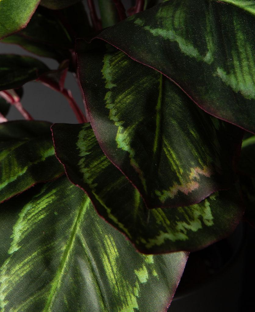 closeup of faux prayer plant against black background