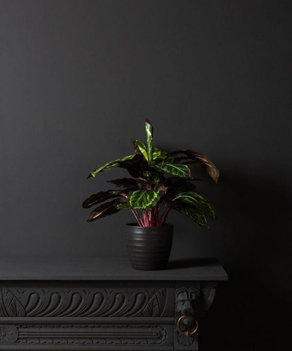 Artificial Prayer Plant