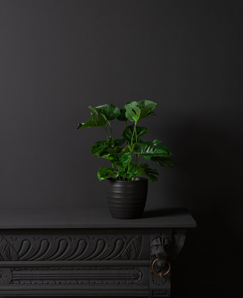 fake cheese plant