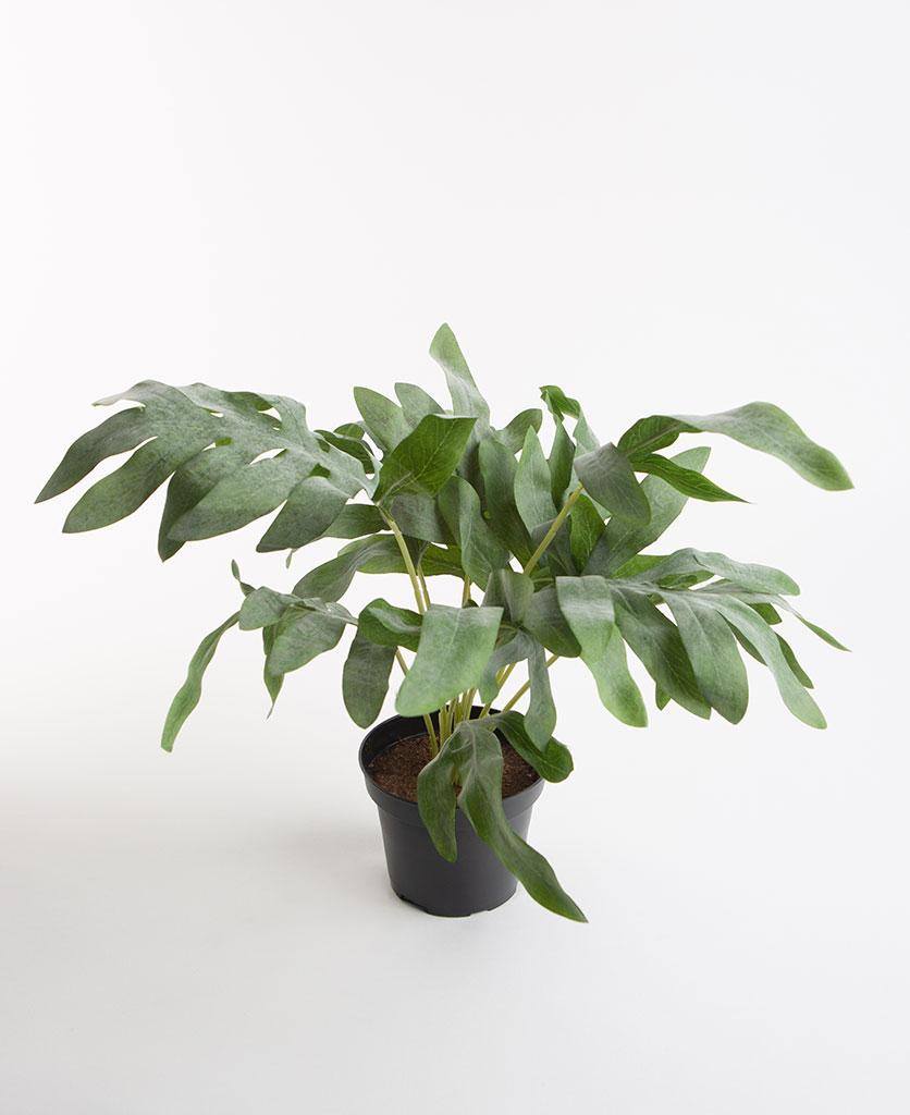 WIDE LEAF FERN small artificial plant