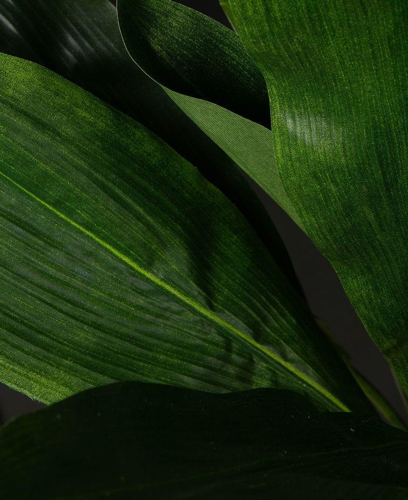 closeup of apsidistra faux plant