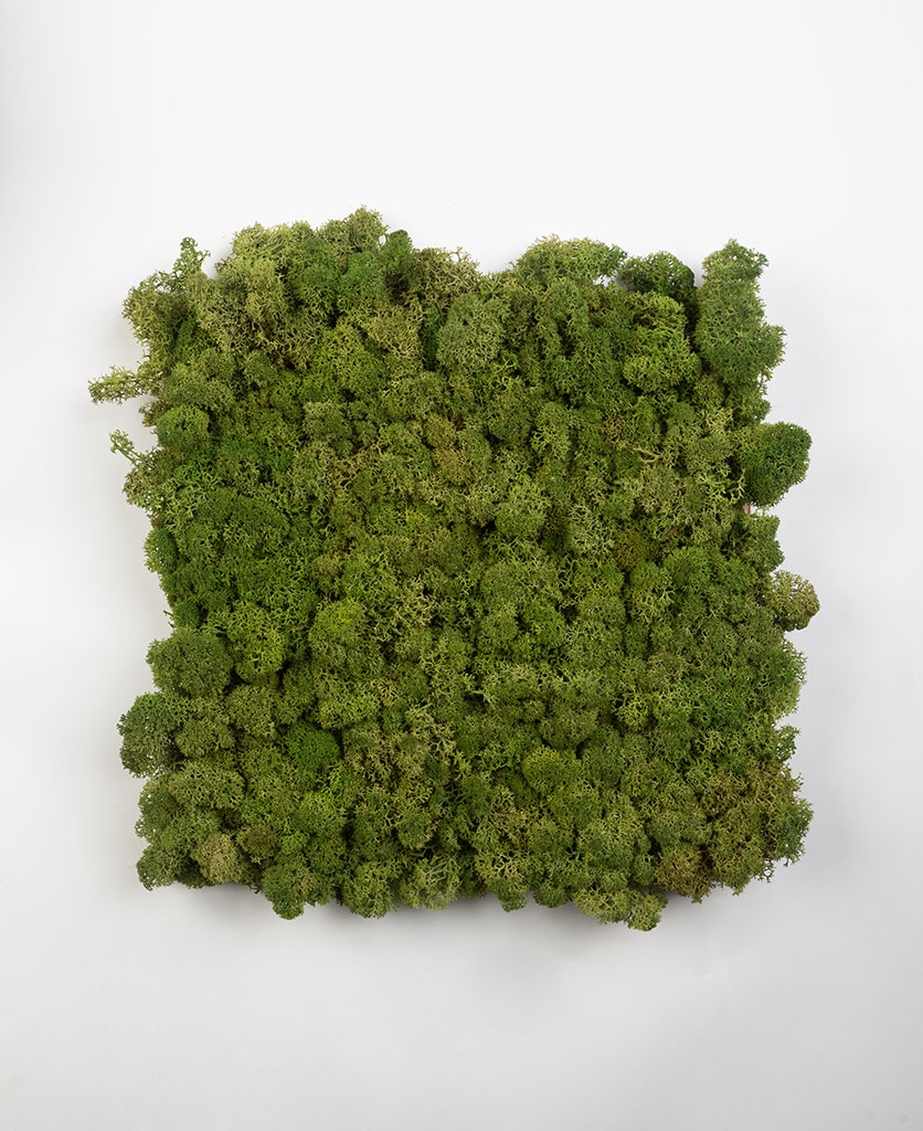 preserved moss for decorative moss wall art