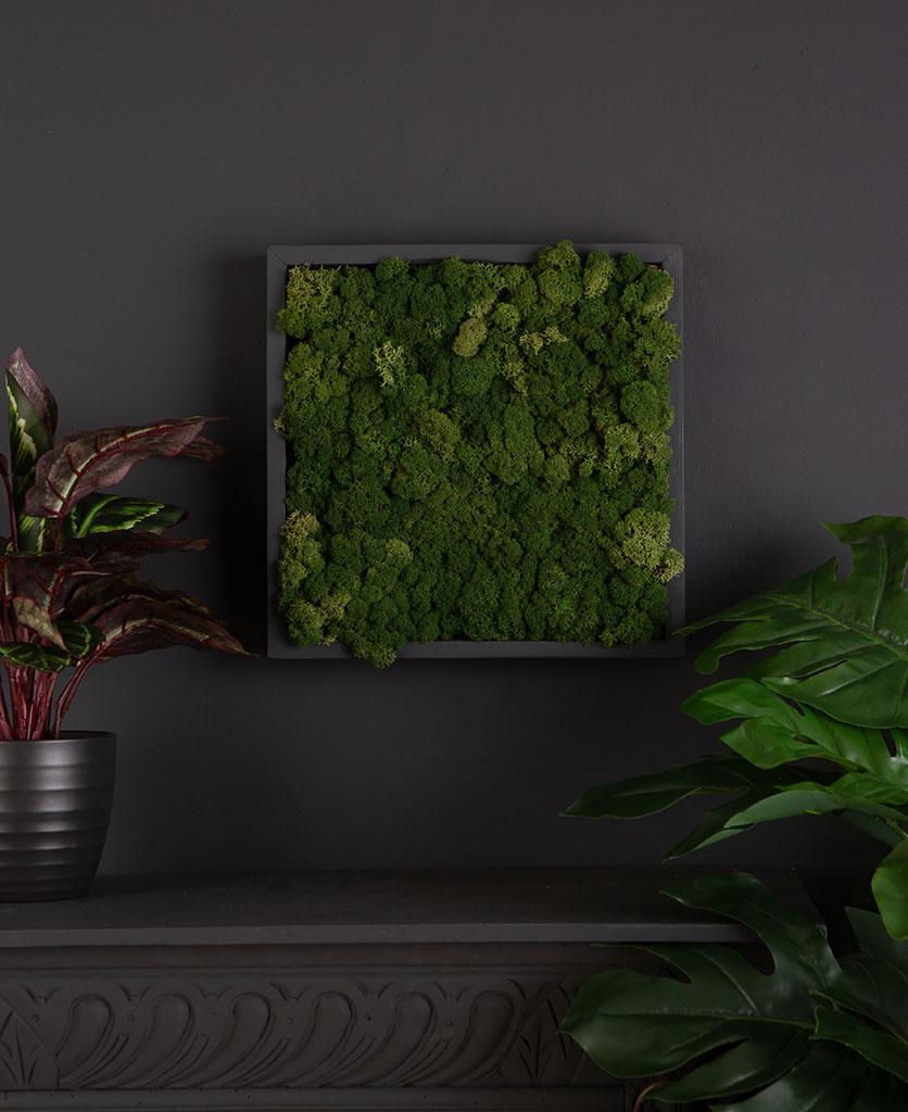 Sheet Moss for making moss panel art