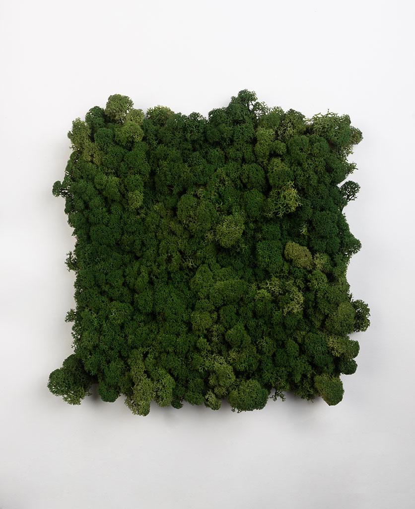 dark green preserved moss wall art