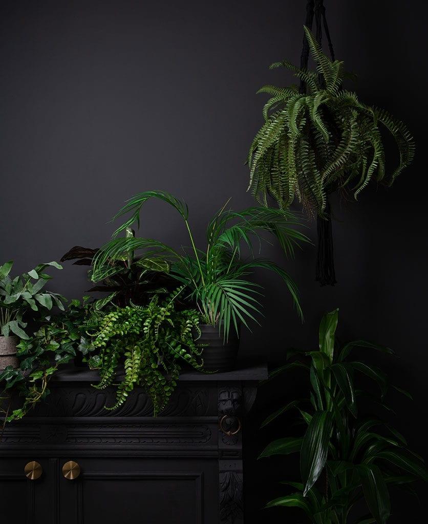 group shot of various faux plants against black background