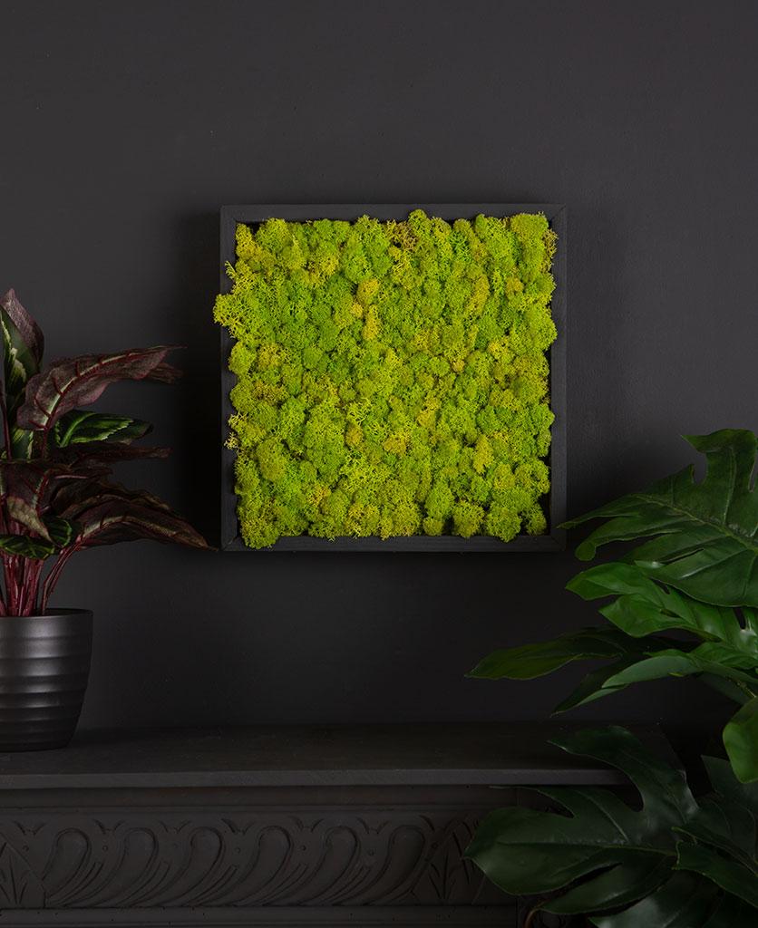 Moss art wall panel