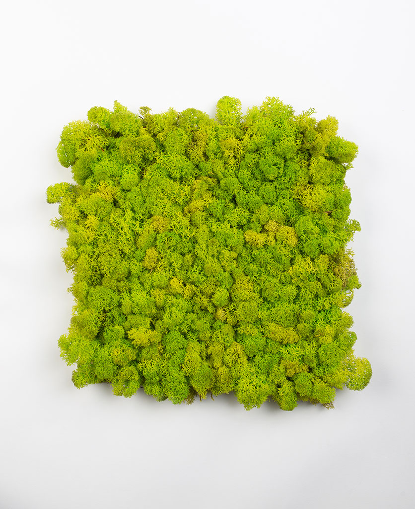 decorative moss wall panel in spring green