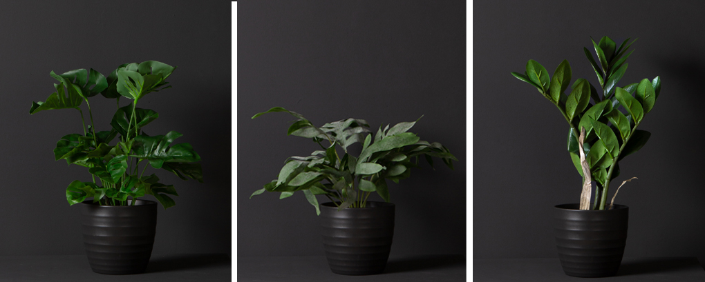 collage of monstera, wide leaf fern and zamifolia against black background