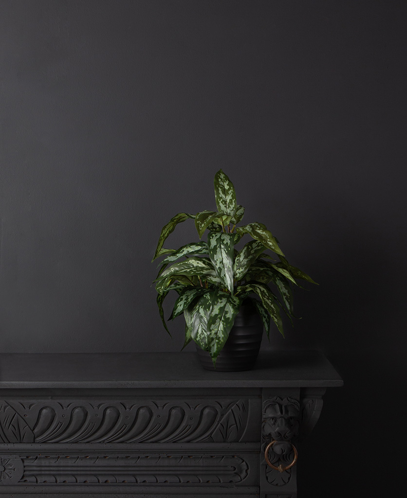 Aglaonema modestum small artificial plant in black vase against black background