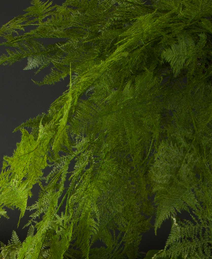 closeup of large Hanging Faux Fern against black background