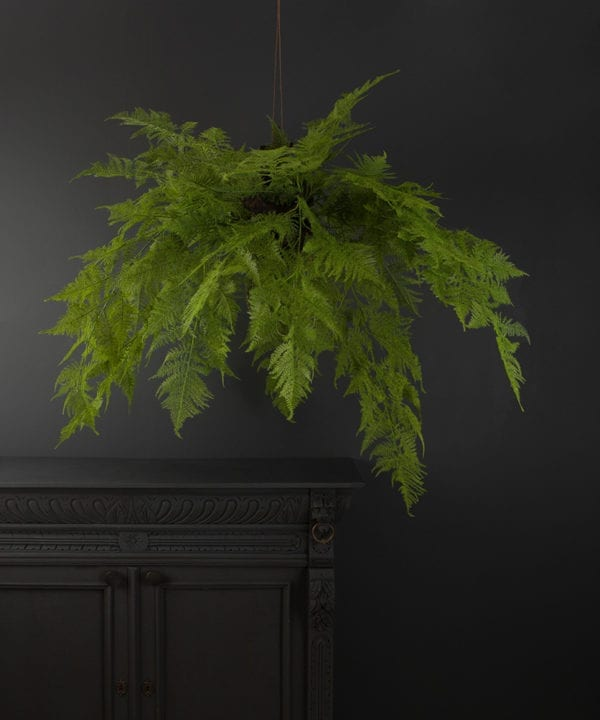 Large hanging artificial fern against a black background