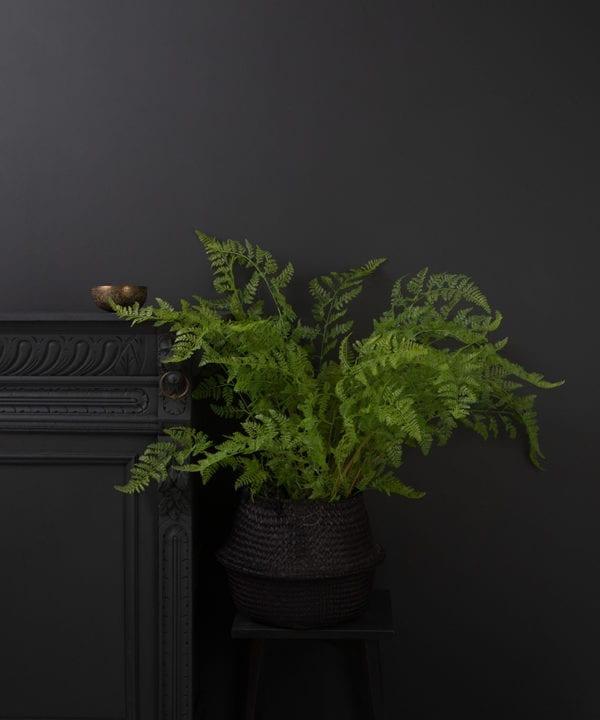 faux bracken fern in a black pot against a black background