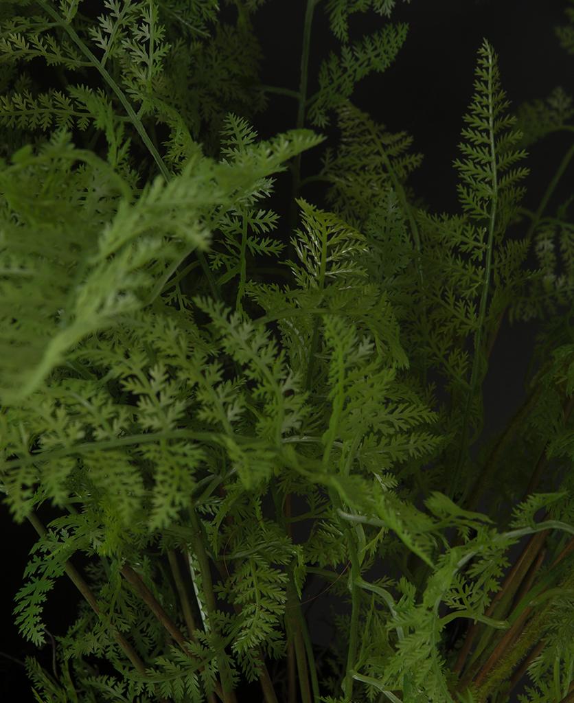 bracken fern closeup