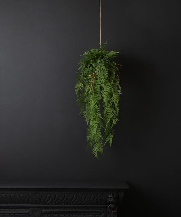 hanging asparagus fern plant