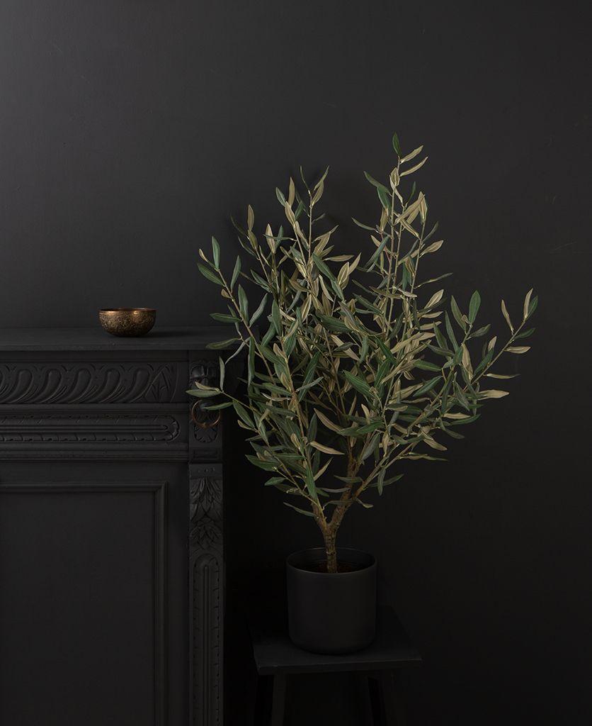 small olive tree dark against black background