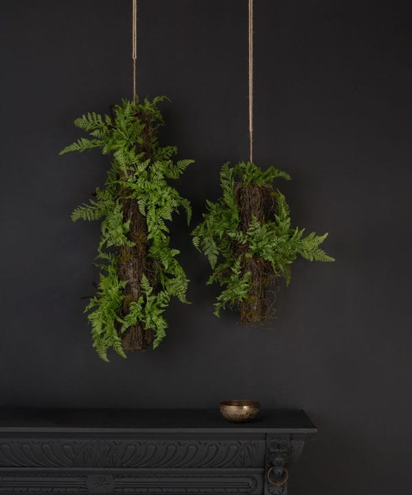 hanging fern with log