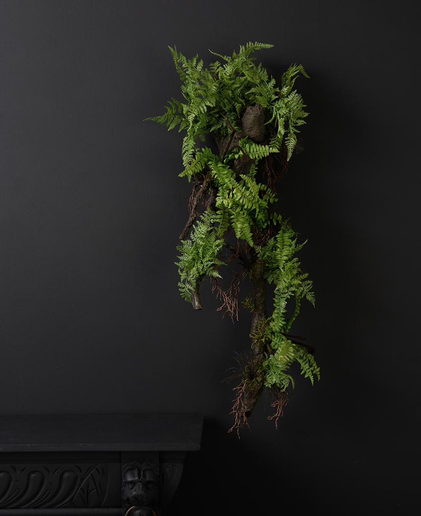 wall fern with log