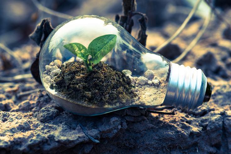 light bulb on the ground filled with soil and a small seedling