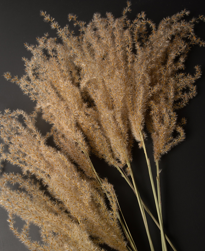 close up image of a bouquet of fluffy reed grass against black background