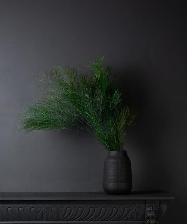 Asparagus Tree Fern