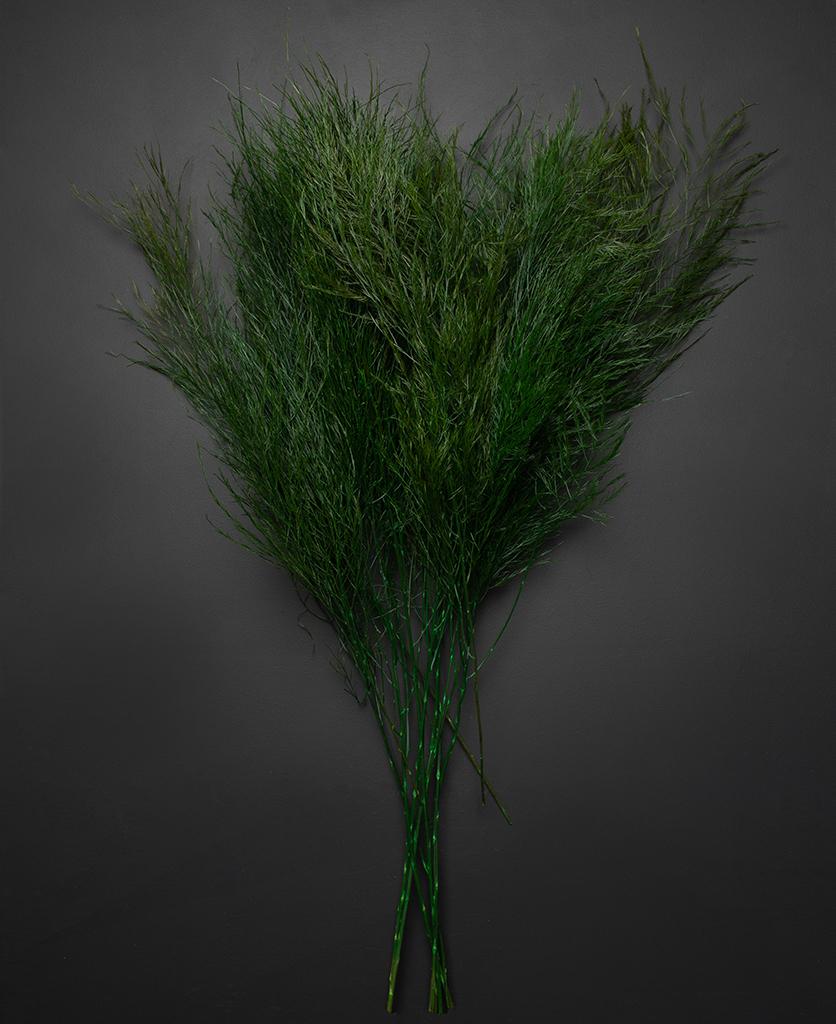 tree fern asparagus