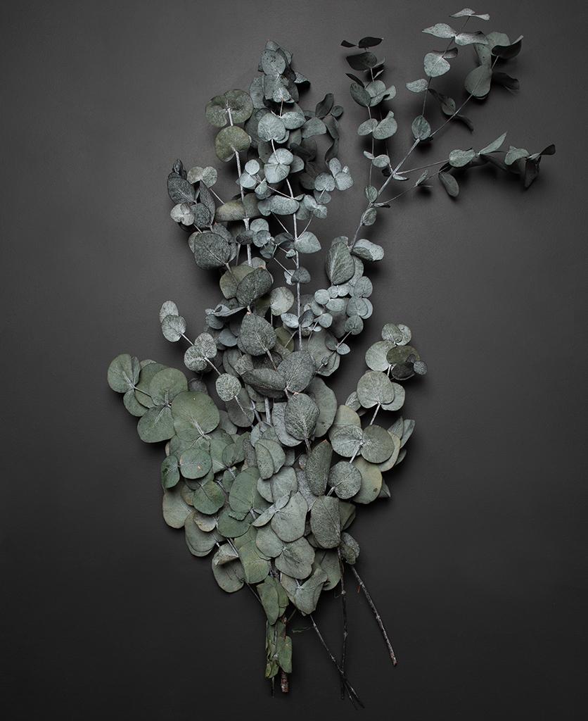 preserved cinerea eucalyptus bouquet against black background