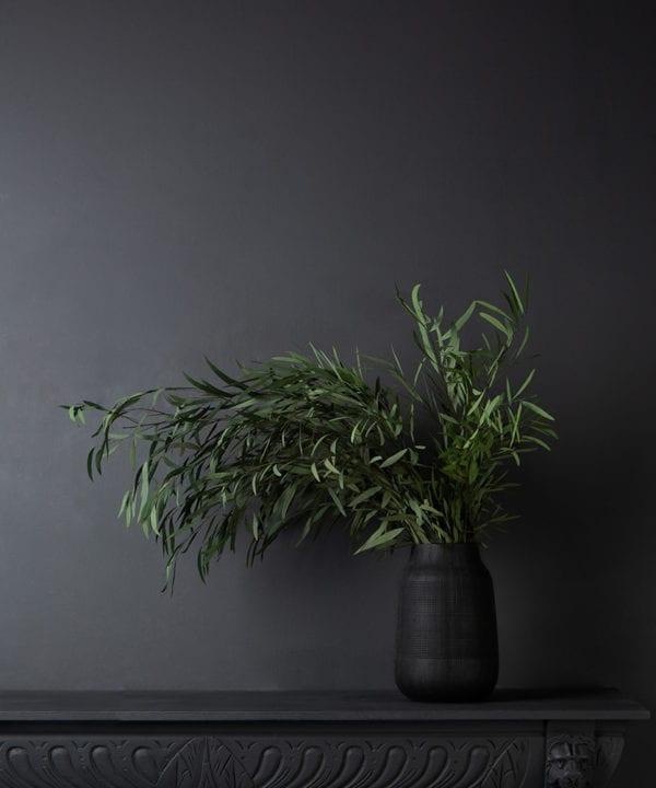preserved eucalyptus