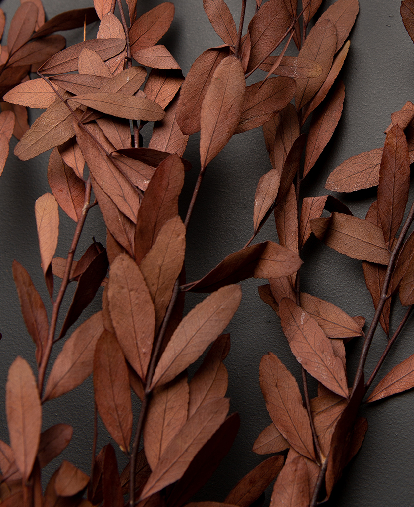 closeup of preserved eucalyptus nicholii red against black background