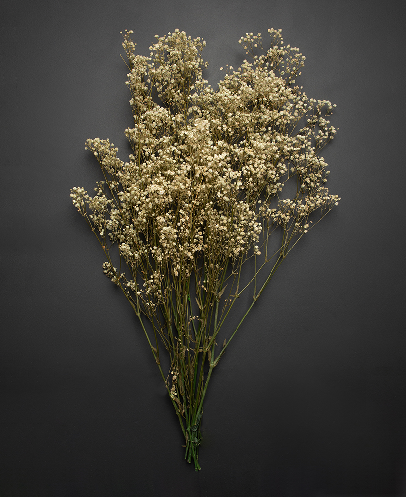 preserved baby breath bouquet against black background