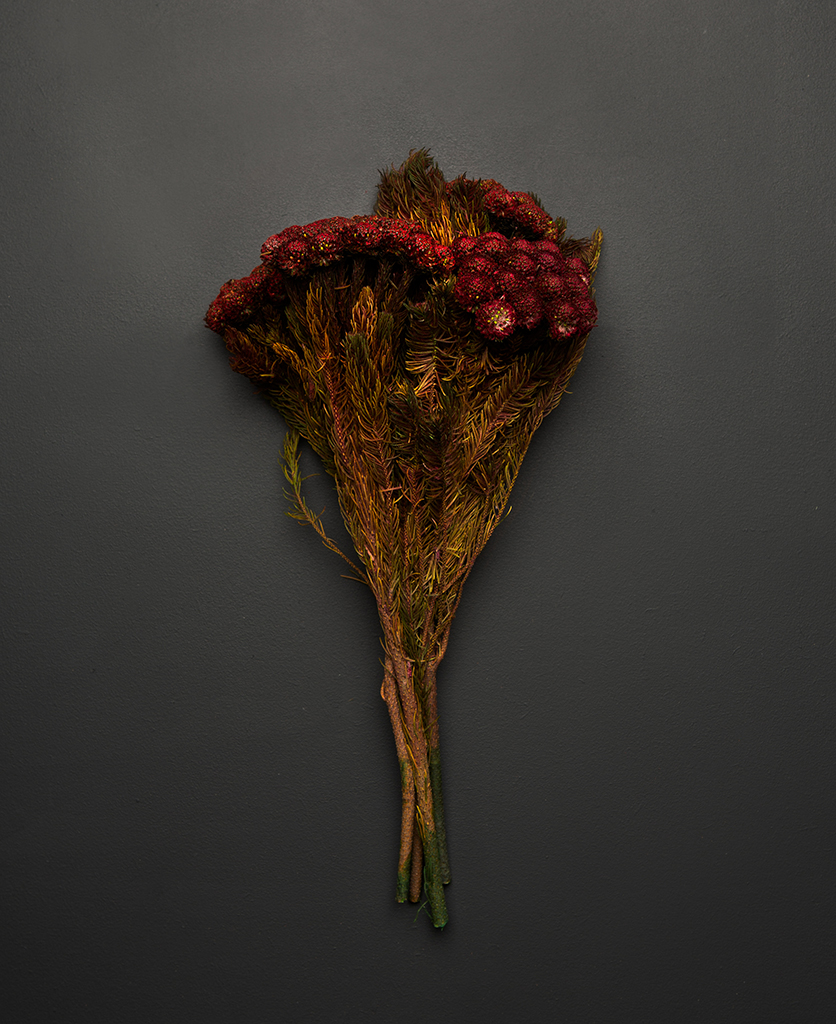 preserved red brunia bouquet against black background