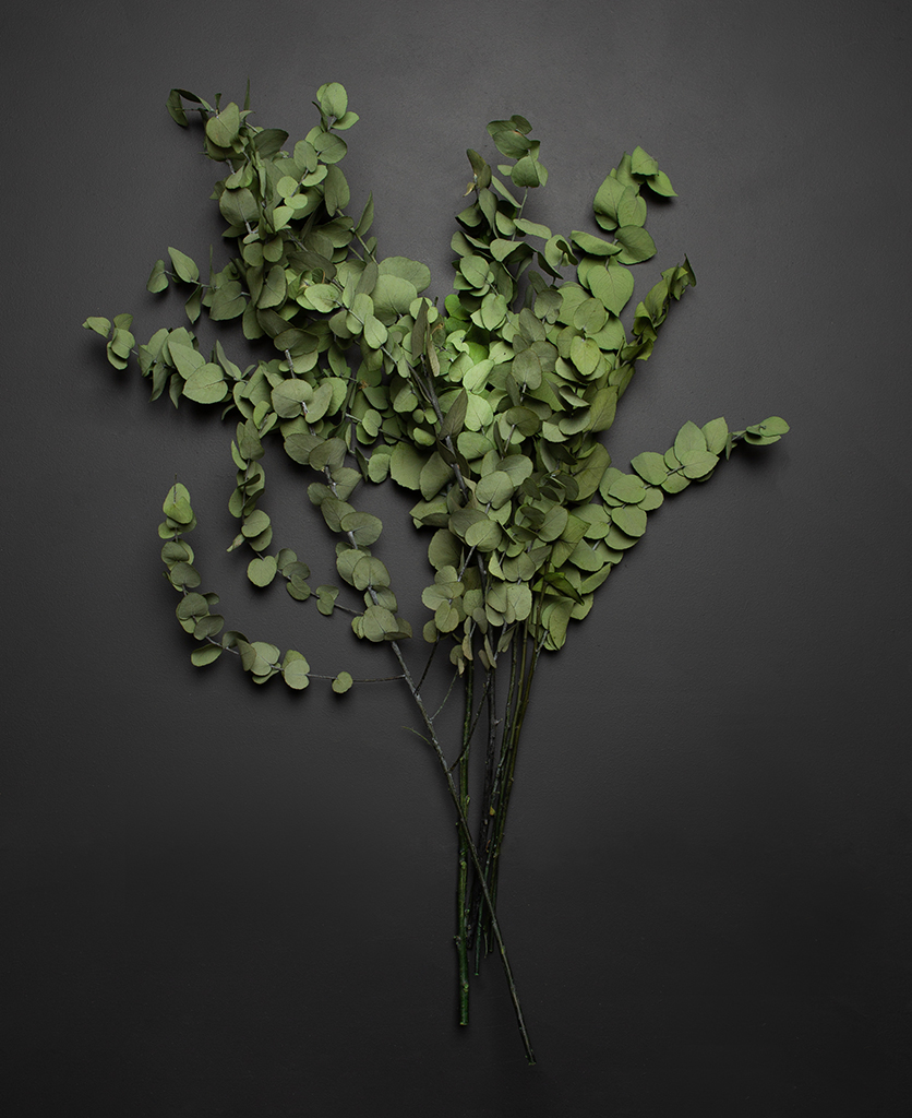 preserved stuartiana eucalyptus bouquet against black background