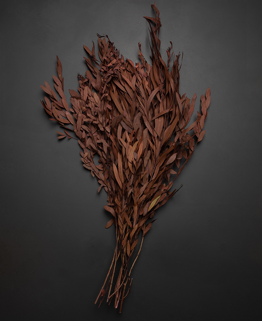 preserved red eucalyptus nicolli bouquet against black background