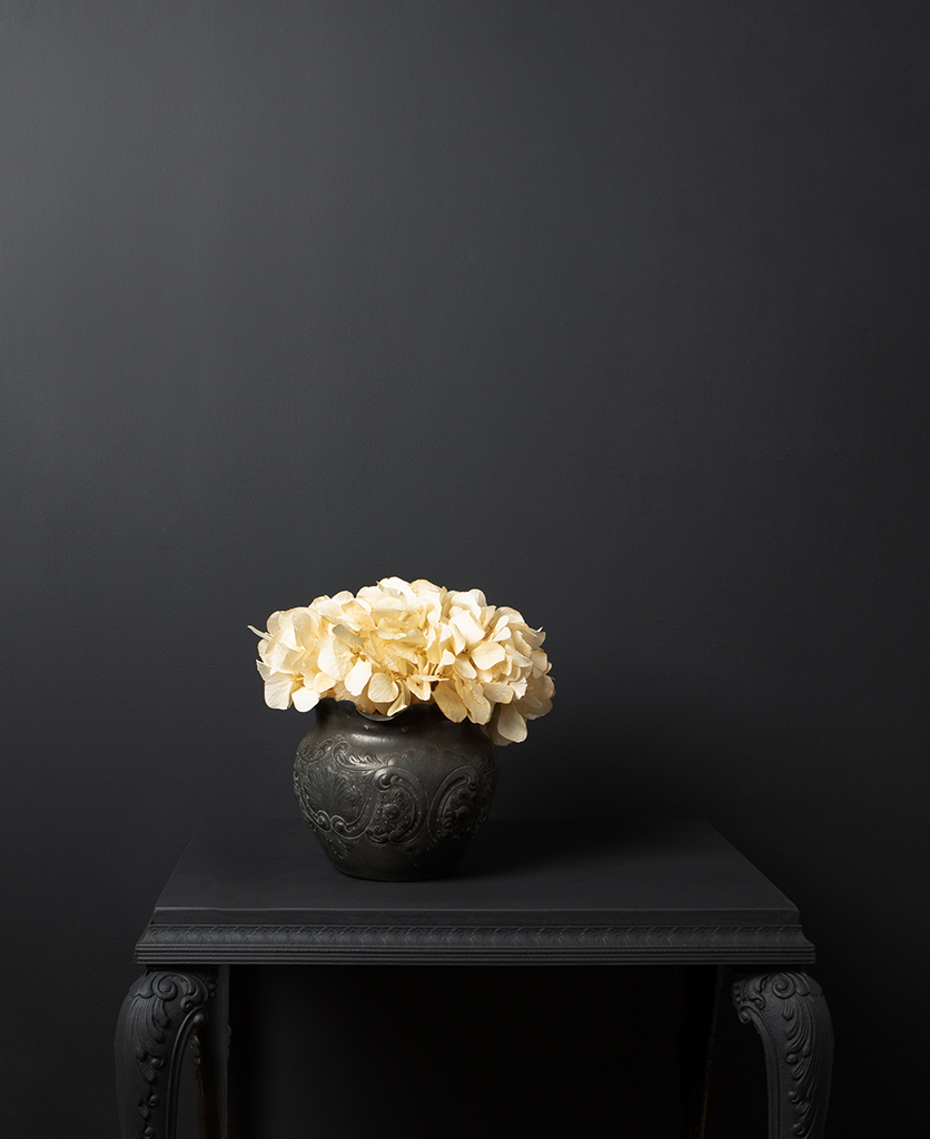 ivory hydrangea