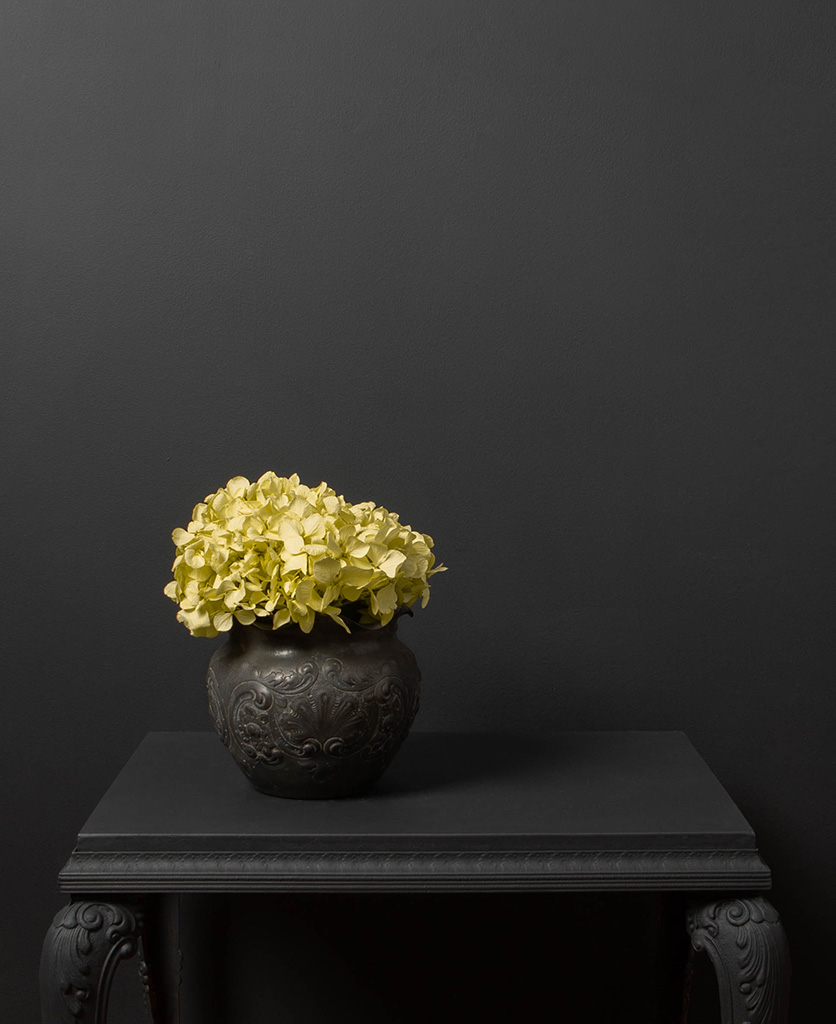 pistachio green hydrangea in a black vase on a black table against a black wall