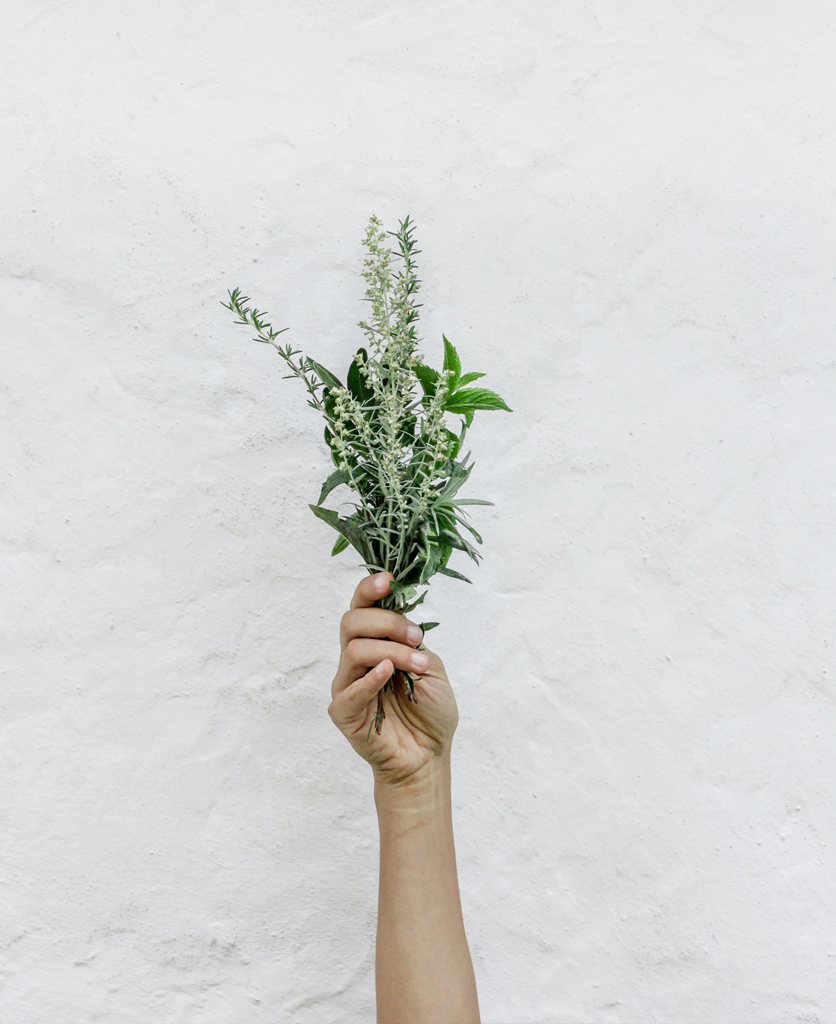 photo of a hand holding herbs against a white concrete wall