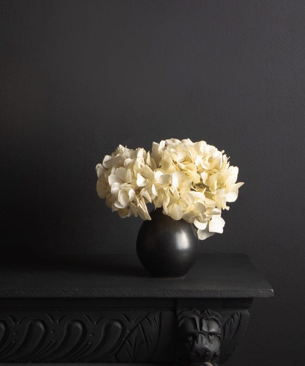 black stem vase with preserved ivory hydrangea stem on black background