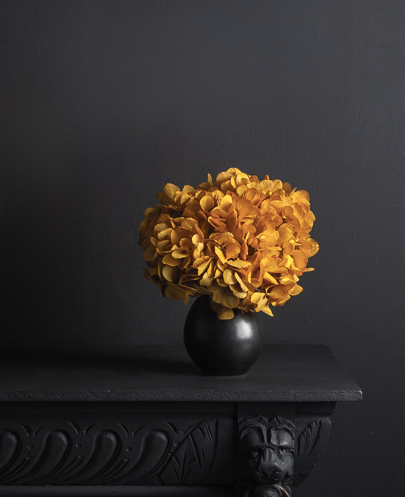 black stem vase with preserved saffron hydrangea stem against black background