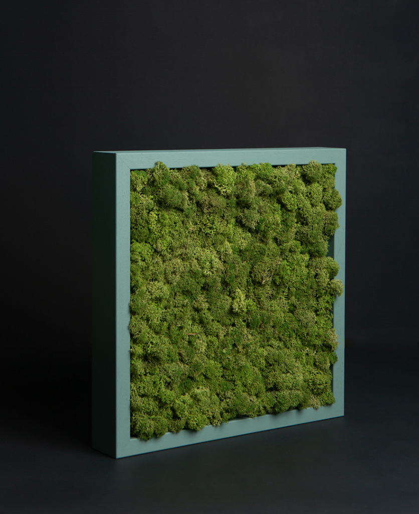 medium green living wall moss panel in sage green wooden frame against black background
