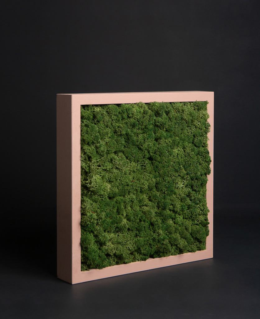 moss panel in pink frame against black background