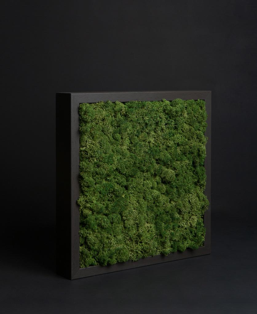 moss panel in mud wrestling wooden frame against black background