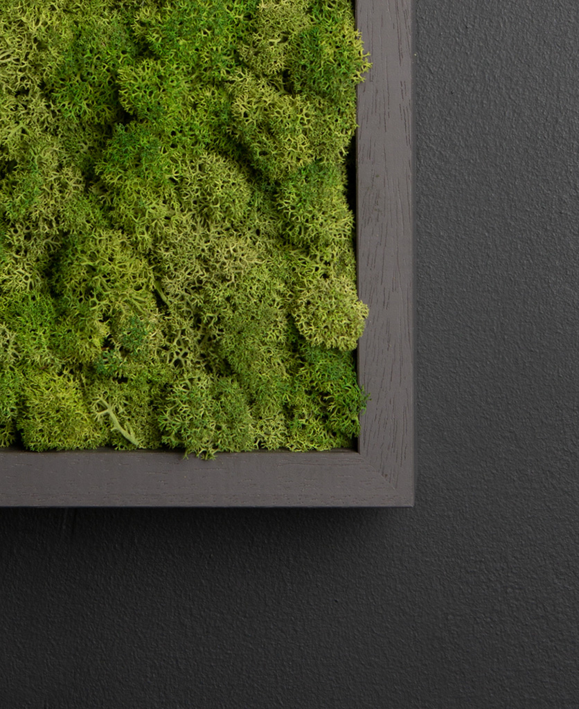 close up of moss wall panel in dark grey frame on black background